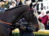 Sprinter Sacre is paraded at Newbury Racecourse on February 8, 2014