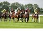 horse cheltenham