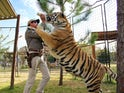 Joe Exotic grapples with a tiger on Tiger King