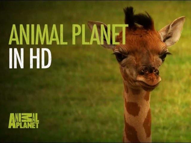 Animal Planet Sky