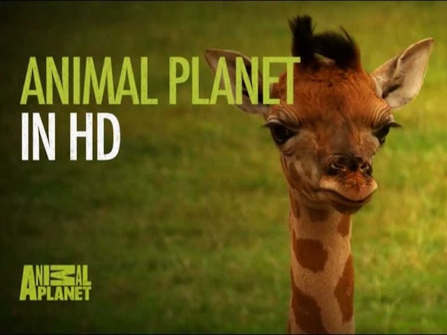 Travel Channel, HD version of Animal Planet exit Sky